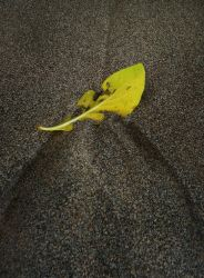 Leaf in Sand by maxpower