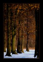 Snowy Woods by bamako