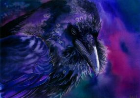 Common raven by Verenique