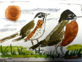 American Robins afoot by GentlestGiant