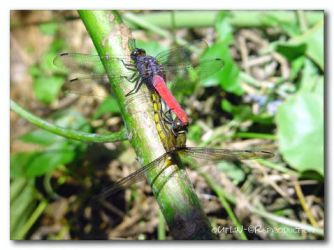 The moment of the dragonflies by outlin