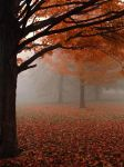 UNRESTRICTED - Autumn Park by frozenstocks