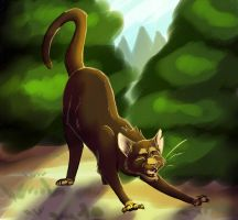 10.Mudfoot-ShadowClan Deputy by Simatra