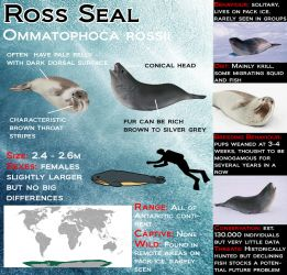 Ross Seal by Shadow-and-Flame-86