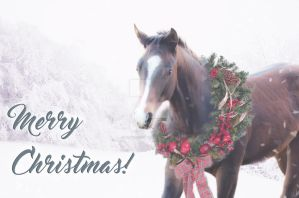 Christmas Pony Card by winkels2014