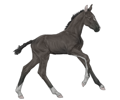 [SOLD] IMPORT: Foal 004 by RiverFall-Industries