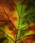 Leaf by scotto