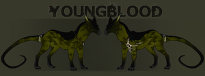 :Youngblood Reference Sheet: by Kdaea