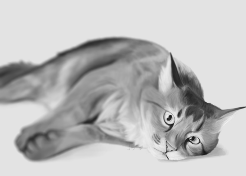 cat by JAY-WlNG