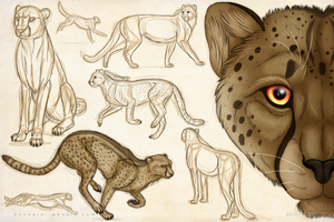 Cheetah Sketch Page by Bandarai