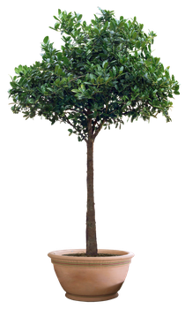 plant png 13 by DIGITALWIDERESOURCE