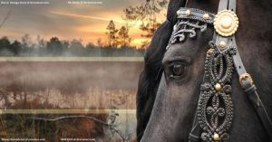 Premade - Friesian - SOLD by HKW1994