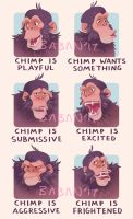 Chimp is... by BabaKinkin