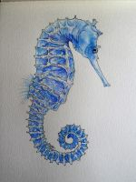 Seahorse by sylkdrawer