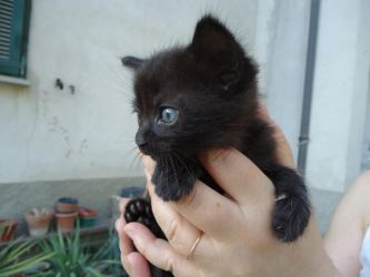 New born kitty! Hello World! by Odino87