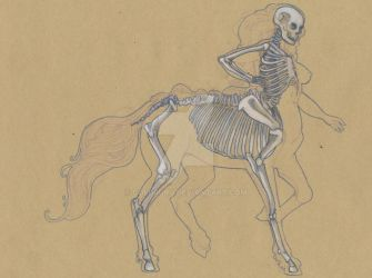 Centaur Anatomy - Skeleton Tab. by ColdRuru