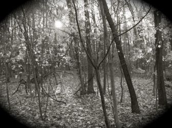 Worcester Woods 5 by scarygirl67