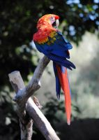 Lormet-Zoo-0390-01small by Lormet-Images