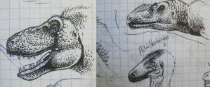 Theropods faces by Xiphactinus