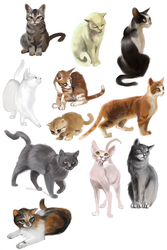 cats speedpaints by cut-box