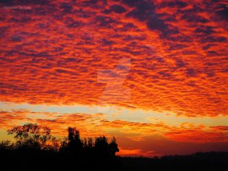 Bush Fire Sunrise by Rebecca-Danielle