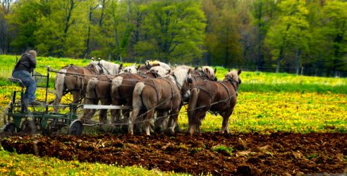 Amish plow by Laceysims