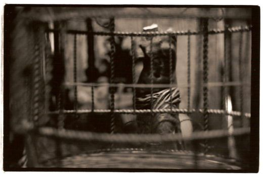 The Caged Lament by zinful