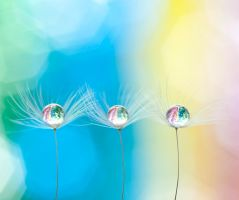 Droplet fairys by pqphotography