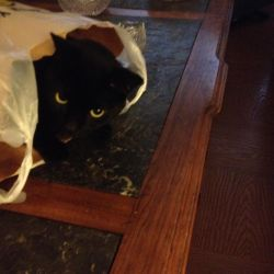 The Cat's in the Bag by Cosmic--Chaos
