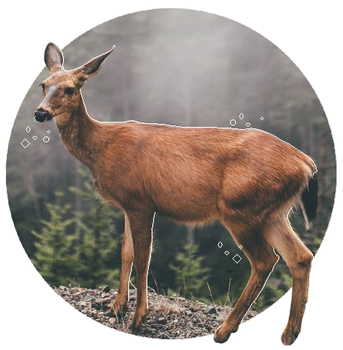 +| Grunge Deer [Stamp #2] |+ by Sweet-Game