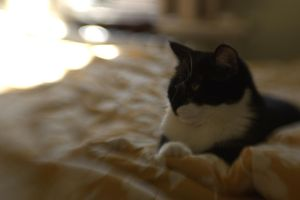 Lulu on the bed by Ennev