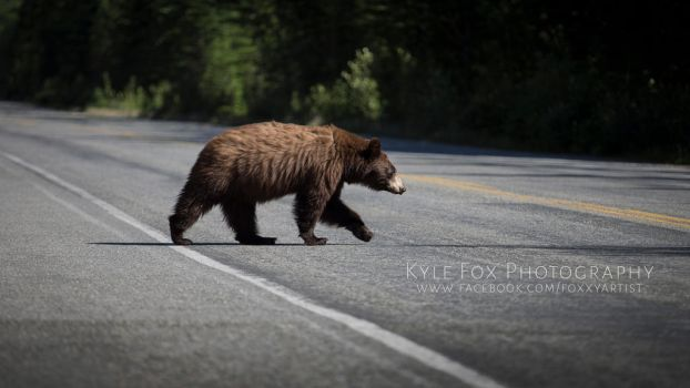 Why did the bear cross the road? by Mckronic