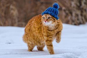 Red-headed cat 03 by Glotobarm