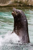 A Happy Sealion by Scuzi