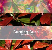 Burning Bush by TehAngelsCry