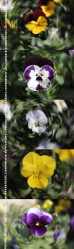Composition of Flowers by VeroW