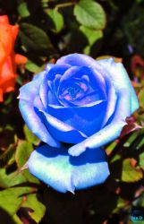 Teresa's Blue. by isider