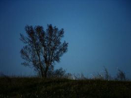 Lone Tree on a Hill by anonymoose1