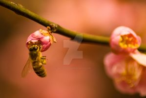 Bee on Pink Tree by poetcrystaldawn