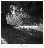 Shadowed Path by cra5her