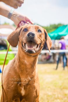 Rhodesian happiness by Tollerka