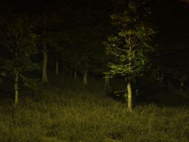 dark forest stock by anodyne-stock
