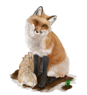 Fox by SilverlightRaynn