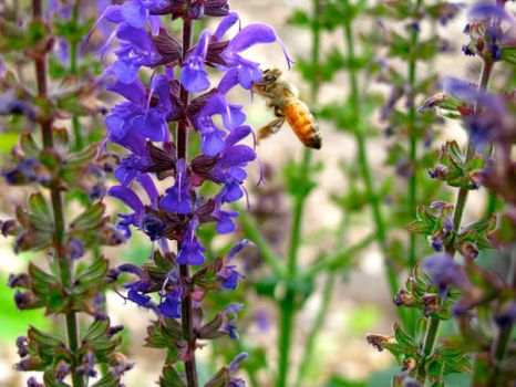 Bee  and Flower by StephenPB