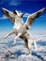 The Dog Flying by Agneli
