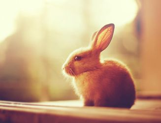 Autumn Bunny by arefin03