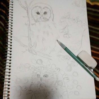 Owl wip by mystifyingmelodies