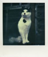 Polaroid - Looking Up by Jane-Rt