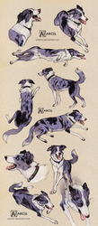 Studies of Shaun the Really Good Boy by Astarcis
