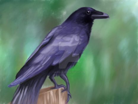 Raven by Queen-of-Evve